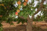 زراعة الجوف تنظم ورشة عمل للتعريف بالسياحة الزراعية والريفية